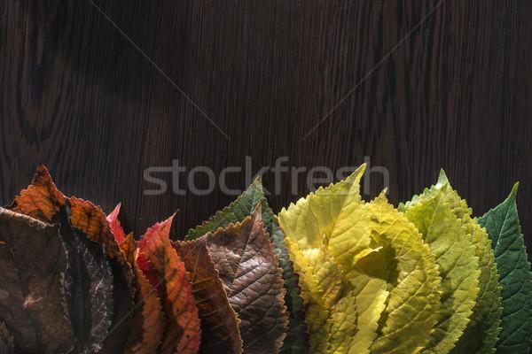 Escuro árvore floresta abstrato folha Foto stock © deyangeorgiev