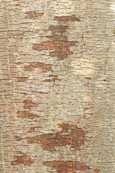 ツリー 樹皮 ブラウン 水平な 亀裂 抽象的な ストックフォト © dezign56