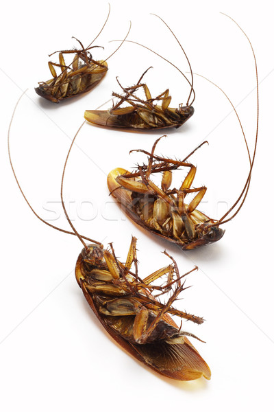 Dead Cockroaches Stock Photo C Yiap See Fat Dezign56 4864409