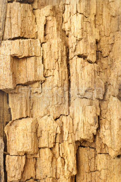 Texture of weathered and cracked wood Stock photo © dezign56