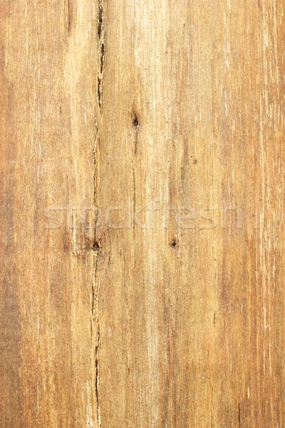 Bare tree trunk surface texture  Stock photo © dezign56
