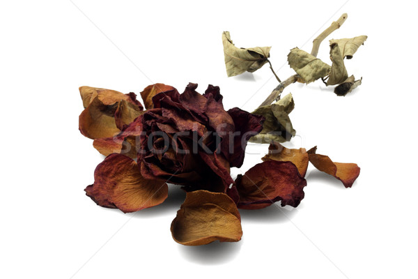 Martwych wzrosła kwiat podziale romans depresji Zdjęcia stock © dezign56