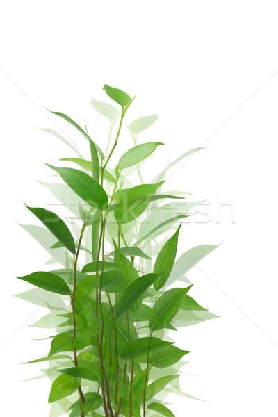 Yeşil bitki genç beyaz doğa Stok fotoğraf © dezign56