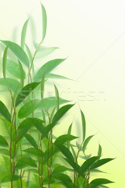 Yeşil genç bitkiler beyaz doğa Stok fotoğraf © dezign56