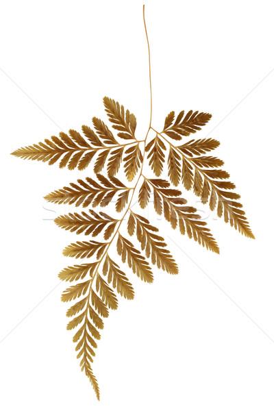 Dry Fern Leaf  Stock photo © dezign56