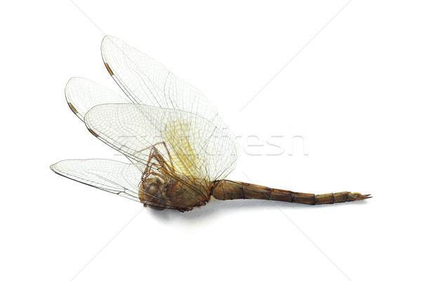 мертвых Dragonfly изолированный белый волос объект Сток-фото © dezign56