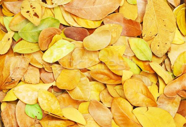 Fallen leaves Stock photo © dezign56