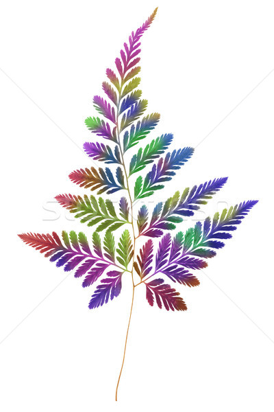 Multicolour Fern Leaf  Stock photo © dezign56
