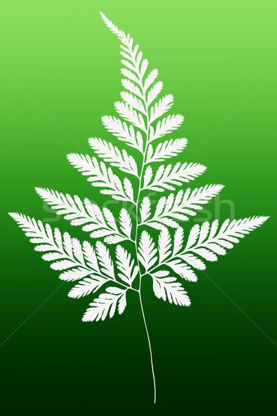 Witte varen blad silhouet groene patroon Stockfoto © dezign56