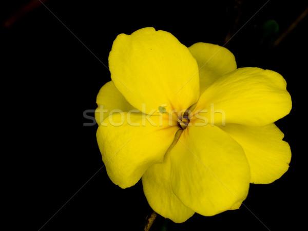 Minuscolo fiore giallo macro ancora vita Foto d'archivio © dgilder