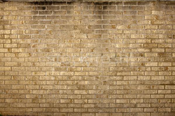 Dirty grungy brick wall Stock photo © dgilder