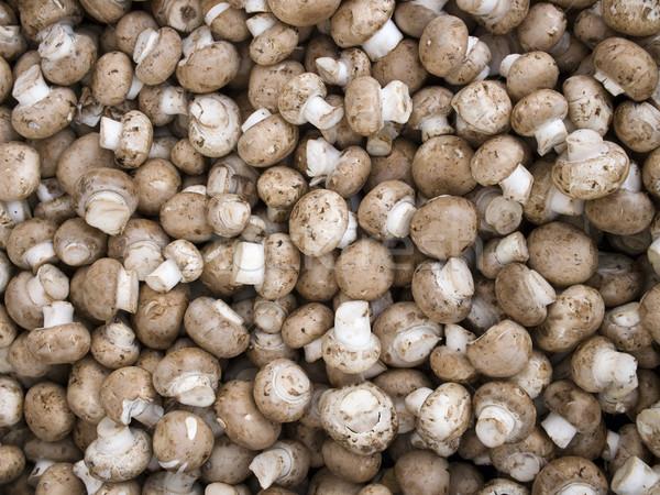 Foto stock: Produzir · orgânico · cogumelos · exibir · agricultores · mercado