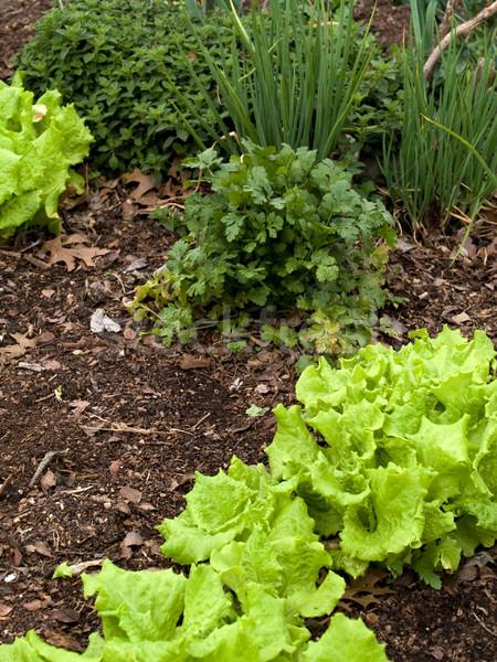 овощей органический смешанный складе фото растущий Сток-фото © dgilder