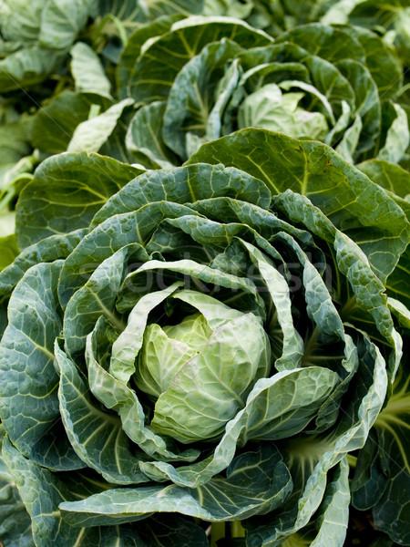 Groenten organisch Brussel spruit voorraad foto Stockfoto © dgilder
