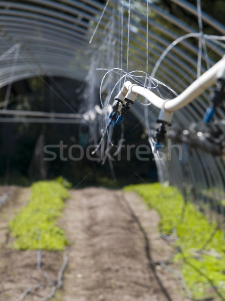 organic farm Stock photo © dgilder