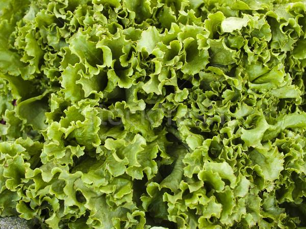 Produrre lattuga display mercato Foto d'archivio © dgilder