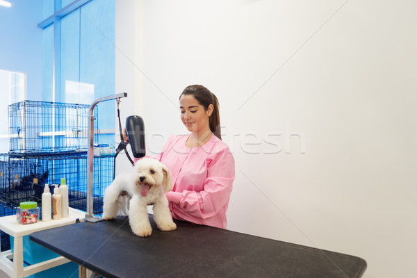 Woman At Work In Pet Store And Grooming Dog Stock photo © diego_cervo
