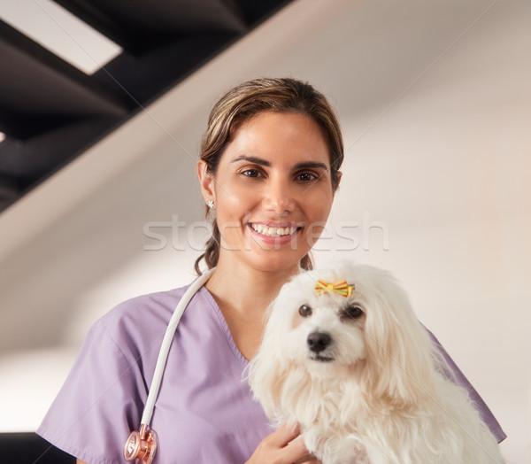 Photo stock: Portrait · heureux · vétérinaire · souriant · caméra · chien
