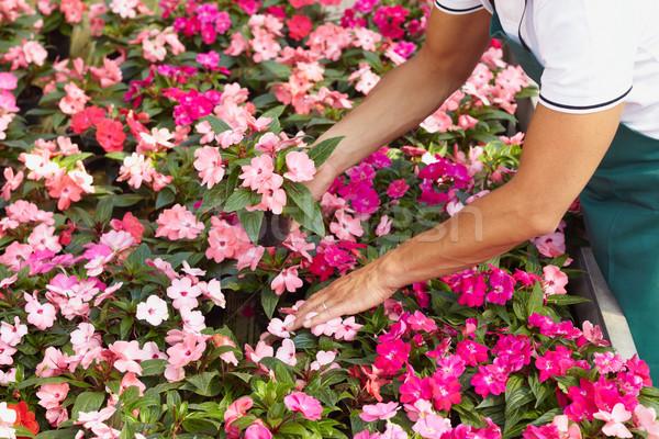 florist Stock photo © diego_cervo