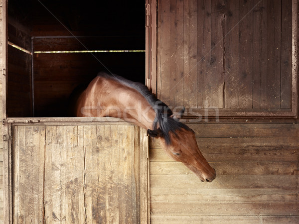 Riding school: horse looking out of stable Stock photo © diego_cervo