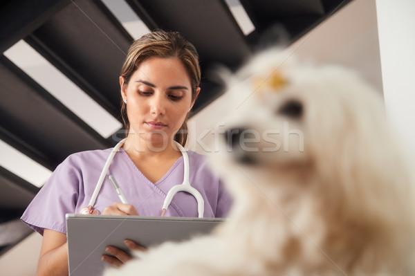 Photo stock: Vétérinaire · maison · appel · chien · médicaux