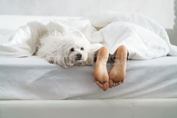 Black Girl Sleeping In Bed With Dog And Showing Feet Stock photo © diego_cervo