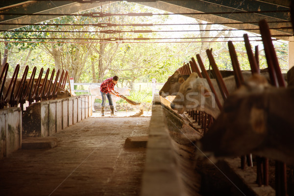Man Cleaning Farm Farmer Sweeping Stables People In Ranch Stock photo © diego_cervo
