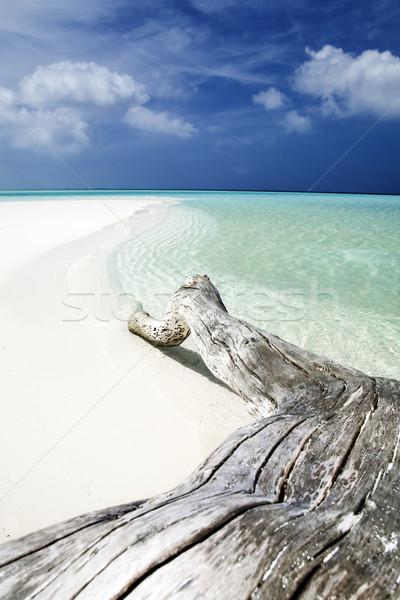 Сток-фото: тропический · пляж · пляж · морем · лет · песок