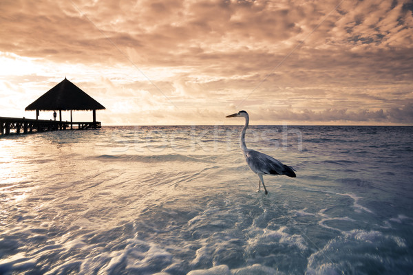 Plage tropicale Flamingo aube dramatique ciel plage Photo stock © diego_cervo
