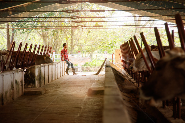Man Cleaning Stables In Farm Farmer Relaxing On Wall Stock photo © diego_cervo