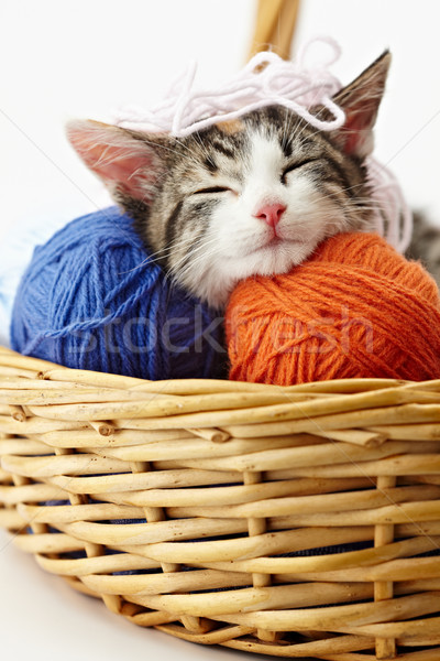 Chat jouer fils tricolor Homme chaton Photo stock © diego_cervo