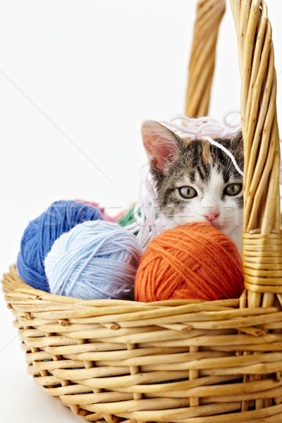 cat playing with yarn Stock photo © diego_cervo