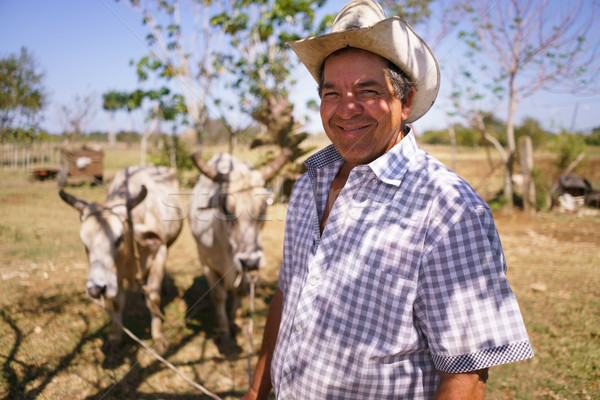 Portrait Happy Man Farmer At Work With Ox Looking At Camera Stock photo © diego_cervo
