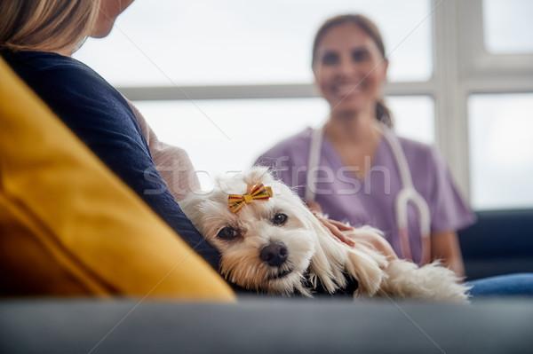 Stok fotoğraf: Veteriner · ev · çağrı · doktor · köpek · sahip