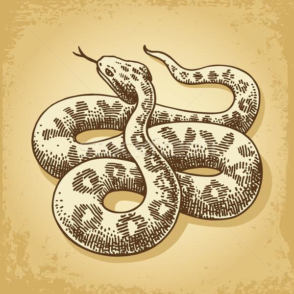 Ground Snake Illustration Vector Stock photo © digiselector