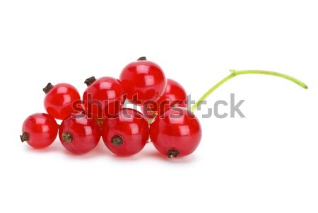 Redcurrants cluster Stock photo © digitalr