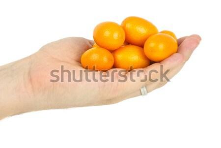 Hand holding some kumquat fruits Stock photo © digitalr