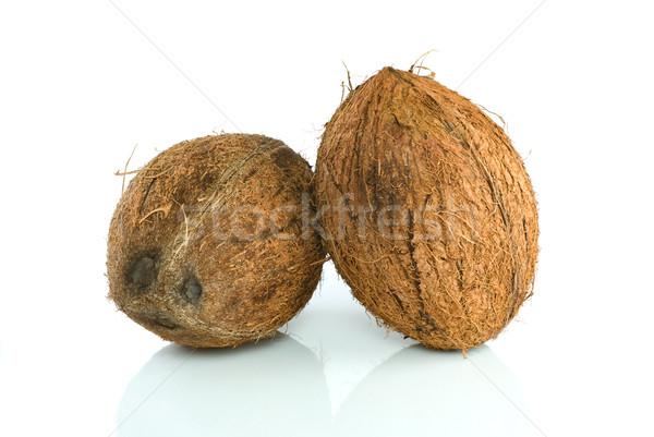 Pair of coconuts Stock photo © digitalr