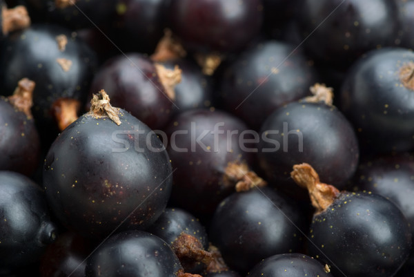 Black currants Stock photo © digitalr