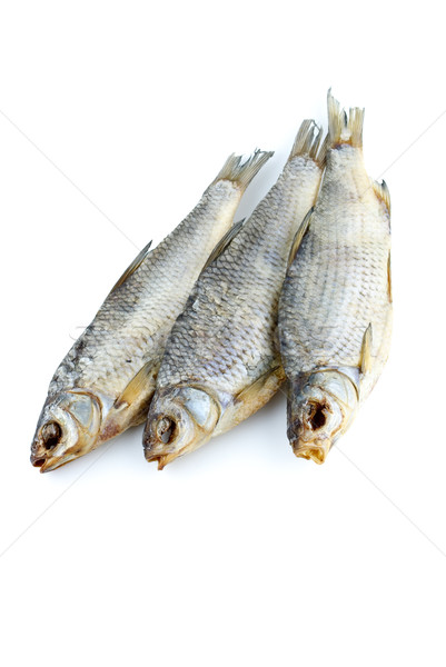 Three sea roach fishes Stock photo © digitalr