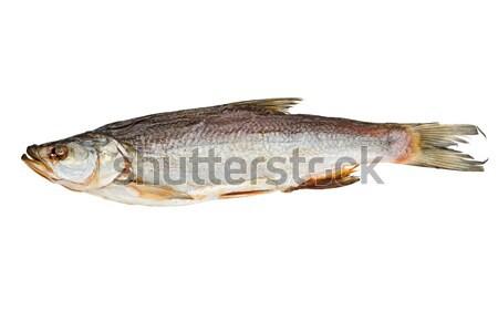 Sózott aszalt hal izolált fehér állat Stock fotó © digitalr