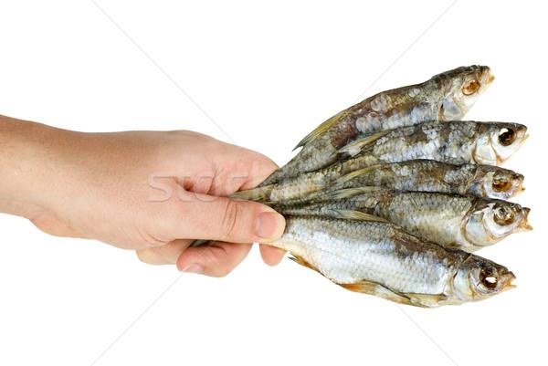 Kéz tart kevés sózott aszalt halfajok Stock fotó © digitalr