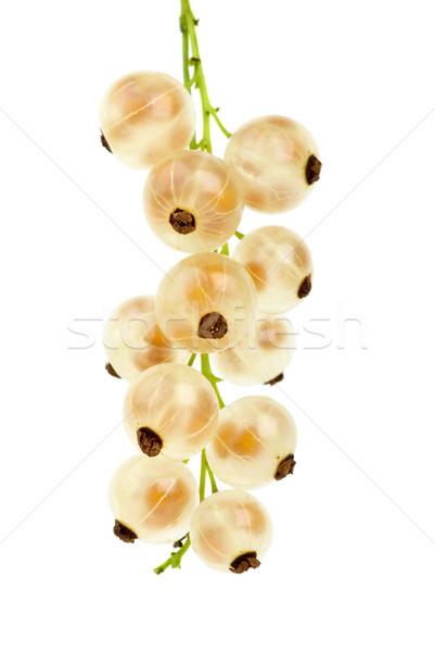 Golden currants Stock photo © digitalr