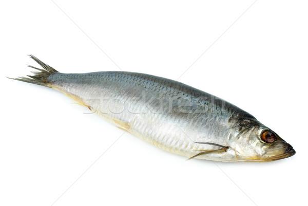Sózott izolált fehér hal halászat friss Stock fotó © digitalr