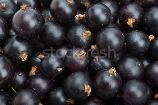 Black currants closeup Stock photo © digitalr