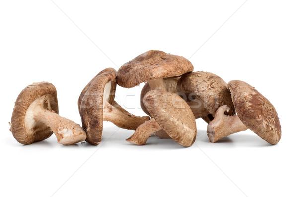 Three fresh shiitake mushrooms Stock photo © digitalr