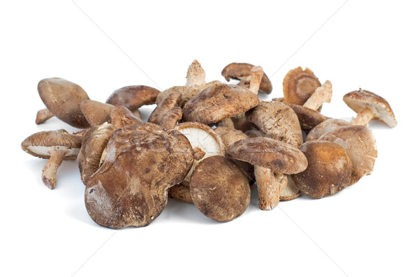 Stock photo: Several fresh shiitake mushrooms