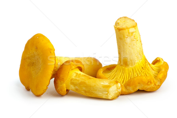Three chanterelle mushrooms Stock photo © digitalr