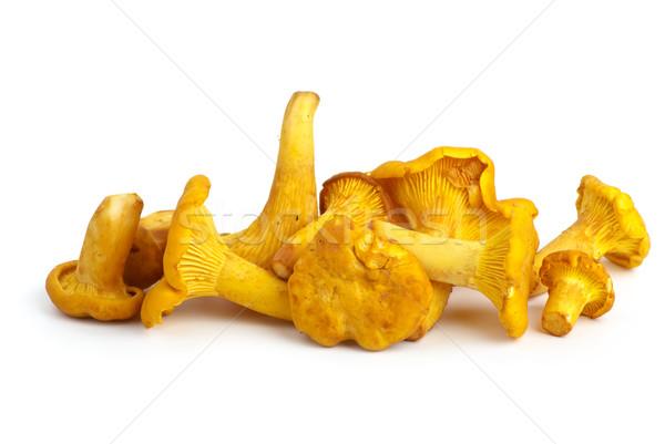 Small pile of chanterelle mushrooms Stock photo © digitalr