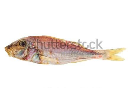 Suszy czerwony ryb odizolowany biały Zdjęcia stock © digitalr